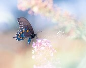 Butterfly Fine Art Photograph