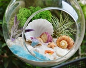 "Mermaid Beach Terrarium Kit ~ 2 AirPlants ~ Beach Decor ~ Shells ~ Sleeping Mermaid in Shell ~ 7"" Glass Terrarium ~ Gift Idea"