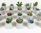 Wedding Favors - Mini Beveled Edge Square Concrete Planter - Natural Concrete Vessel - Succulent Vase - 50 Vases