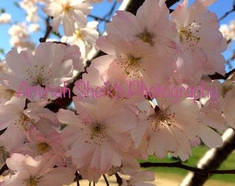 2015 DC Cherry Blossom Photography_0738