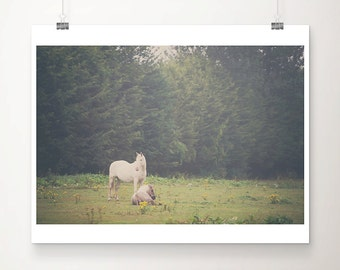 white horse photograph animal photography rustic decor farmhouse decor green field rustic wall art equestrian equine photograph