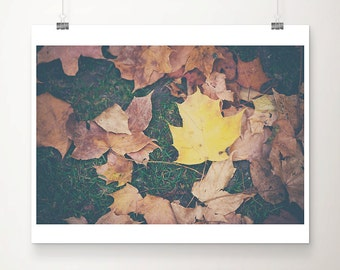 fall photograph yellow leaf photograph nature photography autumn photograph yellow leaf print brown leaf photograph