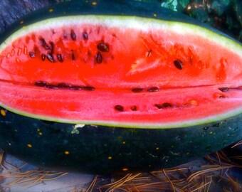 BEST TASTING Watermelon Organically Grown Heirloom Ali Baba Seeds