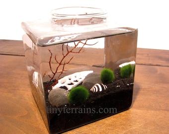 Modern Midnight Cube Marimo Moss Ball Aquarium / Terrarium: Choice of Several Different Colors