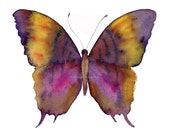 99 Marcella Daggerwing Butterfly, Original or Giclee Print - Watercolor Painting, Wall Art, Wall Decor, Gifts under 15, Fine Art Print, 0407