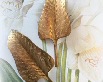 Calla Lily Leaf