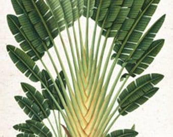 Travelers Traveling Palm Tree Botanical Island Tropical Tommy Bahama Style - Digital Image - Vintage Art Illustration