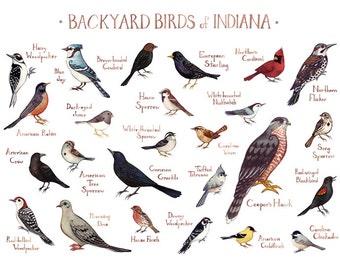 Indiana Backyard Birds Field Guide Art Print / Watercolor Painting / Wall Art / Nature Print / Bird Poster