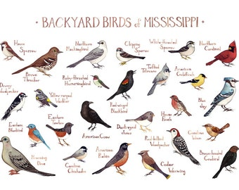 mississippi backyard birds field guide art print watercolor painting