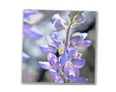 Turquoise Lavender Art, Floral Art Print, Blue Flower, Turquoise, Mountain Lupine, Flower Print, Home Decor, Square Art, Square Pictures