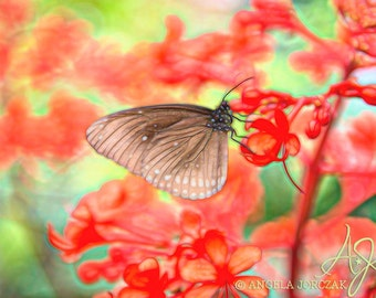 Butterfly Photo Digital Instant Download