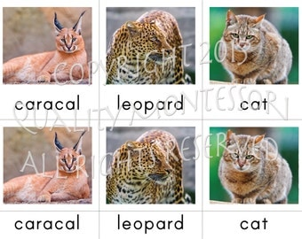 PDF Wild Cats 3-Part Cards in Print, Cursive and D'nealian Fonts - Montessori Begining Reader - Nomenclature Language Cards