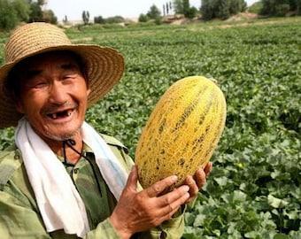 15 China Hami Melon Seeds-1323