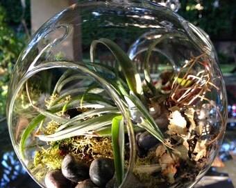 Tantalizing tillandsia (air plant) handblown terrarium
