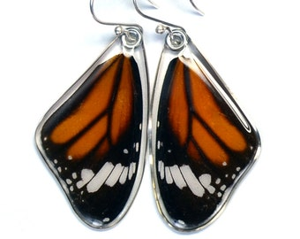 Real Striped Tiger Butterfly (Danaus genutia) (top/fore wings) earrings