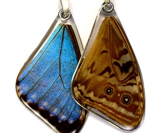 115T Real Blue Morpho Butterfly Wing Pendant (Morpho Portis) (top/fore wing)
