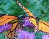 Butterflies, Butterfly Art, Mixed Media Art, Instant Download, Pay/Print/Frame, Make into Canvas Art, Two Monarch Butterflies, Twin Butterfl