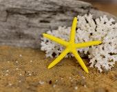Beach Decor Yellow Starfish Painted Starfish - Beach Wedding Decor, Painted Starfish, Starfish Nautical Decor, Natural Starfish, Starfish