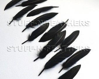 Wholesale / bulk Small BLACK duck feathers, loose, for jewelry making, millinery, crafts / 2-4 in (5-10 cm) long, 60 pieces / FB154-2/60