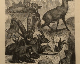 Antique Engraving Bookplate print ALPINE IBEX 1880s EAGLE Victorian Vintage Print 1883 Horns Antlers