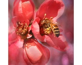 Honeybee On Apple Blossom, Bee Photo, Insect Photo, Nature Photo, Flower Photograph, Wall Decor, Wall Art, Spring Photo, Bee Closeup