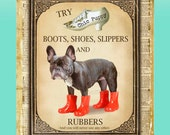 """Shoe Advertisement Giclee Print of Cute Black Brindle Brown French Bulldog Puppy Wall Pop Art titled """"Kinky Boots"""""""