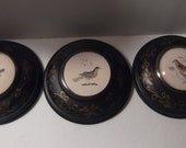 RESERVED   3 Toleware metal illustrated bird pictures, primitive, folk art, Americana beveled glass beautiful display