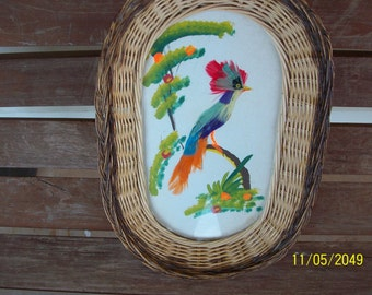 Wicker tray with bird and real bird feathers - picture is under glass -