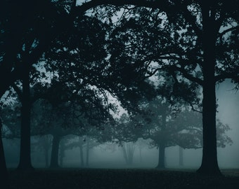 Morning Fog - Photography Print