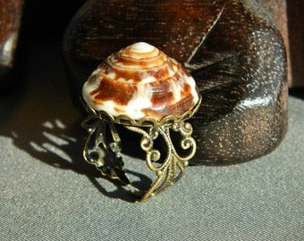 Large Brown Hawaiian Cone Shell Ring - Adjustable, Antiqued Brass Filigree, Statement Ring, Beach