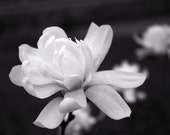 Black and White Flower Print 8x10 or 16x20 Professional Print Fine Art Photography Nature Print