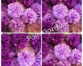 Tissue Paper Pom Poms Set of 28 Poms Weddings//Bridal//Decorations//Anniversary//Ceremony//Reception