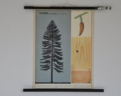 Small Original German Pull Down School Chart. Spruce Tree. Mid Century Botanical Print. Germany.
