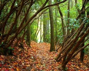 11 x 14 Autumn Walk in the Woods - Original Photography Print, Wall Decor