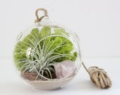Terrarium Kit || Air Plant and Rose Quartz Air Plant with Chartreuse Moss || Small Hanging