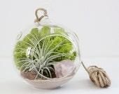 Kit terrarium || Usine d'air + Quartz Rose || Améthyste, Quartz clair, Rose des sables, Géode ou Pyrite aussi disponible || Petite tenture