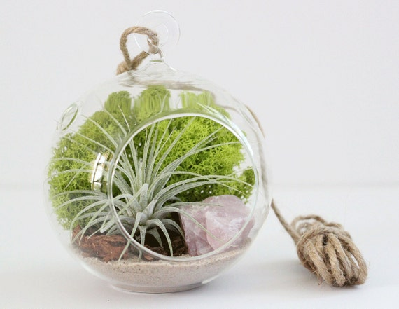 Terrarium Kit || Air Plant + Rose Quartz || Amethyst, Clear Quartz, Desert Rose, Geode, or Pyrite also Available || Small Hanging