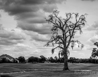 Neighborhood Golf Course in Cypress, TX - Black and White Landscape Photography - Fine Art Photograph