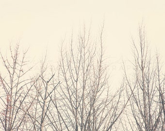 Bare - Photographic Print - fall, travel, Art, Wall, Hanging, white, Decor, Photography, asia, clean, seoul, asian, winter, ginkgo, trees,