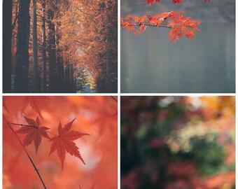 Set of 4 ORANGE Autumnal - Photographic print - fall, autumn, bohemian, boho, art, asia, decor, maple, square, 12 x 12, 16 x 16 20 x 20
