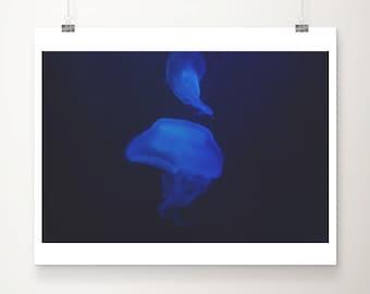 jellyfish photograph jellyfish print animal photography ocean photograph blue home decor nursery wall art ocean print animal print