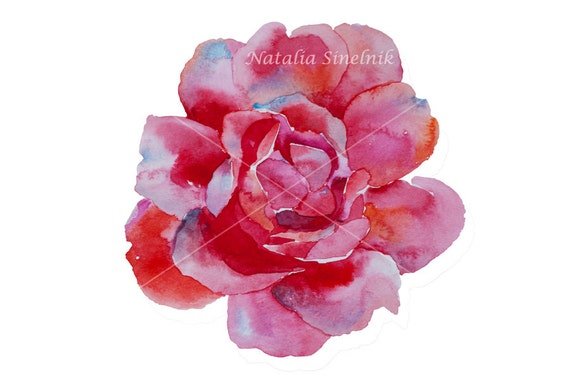 Pink rose head digital download from original watercolor in pink and purple colors, cottage chic style painting clip art