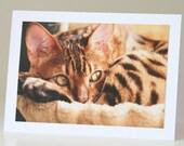 Cat Greeting Card, Cute Bengal Kitten Birthday Card, Fine Art Photography Notecard