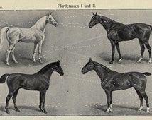 Antique German Encyclopeida Black and White Horses Print - Loaded with Horses  Illustrations 1886 First Edition