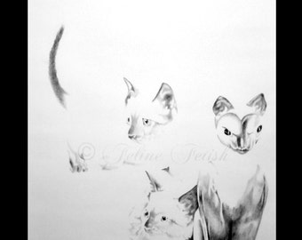 Siamese Cats | Siamese Kittens | Original Cat Art