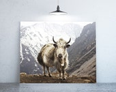 "40"" x 30"" - Nature Photography, Large Print of Yak"