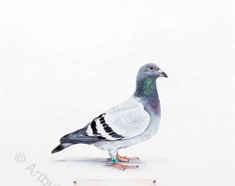 Pigeon - archival print from my original watercolor and gouache painting, bird, identification, nature, scientific