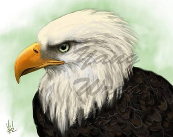 Bald Eagle 8 X 10 giclee print