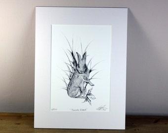 Juvenile Rabbit Limited Edition Print