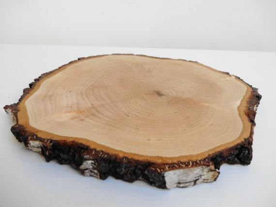 Serving platter birch wood slice tree for Wood trunk slices